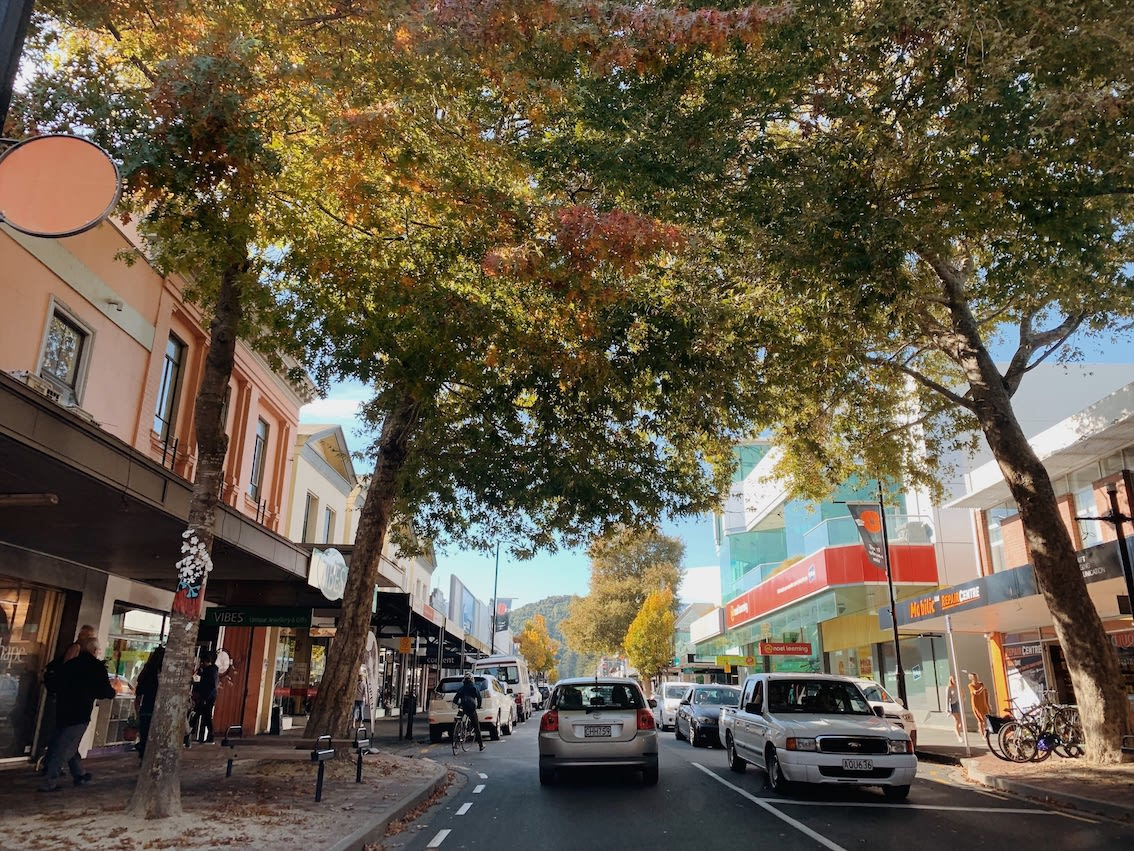 A photograph taken from the passenger seat of a car of the streets of Nelson. It's autumn, and warm-coloured deciduous leaves fill the sky.